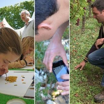 INRA - Agroforesterie, productivité et changement climatique | agroforesterie, agroecologie | Scoop.it