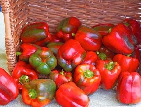 FreshFruitPortal.com | Russia to lift ban on Egyptian fresh produce imports | Fruits & légumes à l'international | Scoop.it