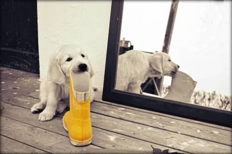 Por qué tu perro prefiere tu zapatilla en vez del juguete que costó un pastón | Personas y Animales | Scoop.it