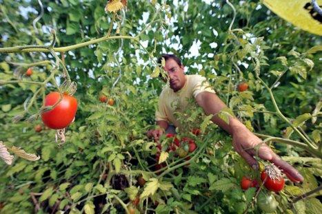 «L'agroécologie est le seul chemin viable» | Chimie verte et agroécologie | Scoop.it