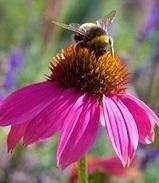 Quando la bella stagione tarda ad arrivare: tintura madre di Propoli ed Echinacea | Rimedi Naturali | Scoop.it