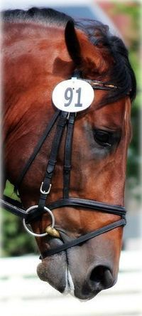 Expressions avec le mot cheval | FLE en ligne | Scoop.it