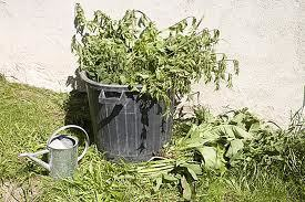 les purins et décoctions de plantes | Potager & Jardin | Scoop.it