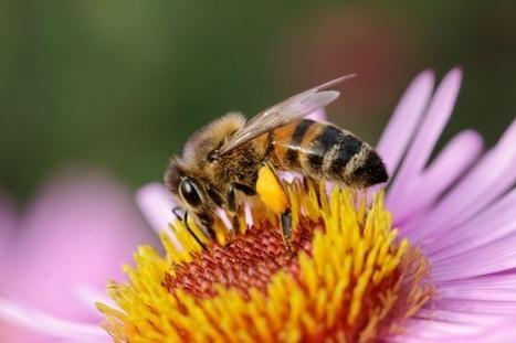 40 élus français partent en croisade pour protéger les abeilles | Les abeilles ont droit à un futur | Scoop.it