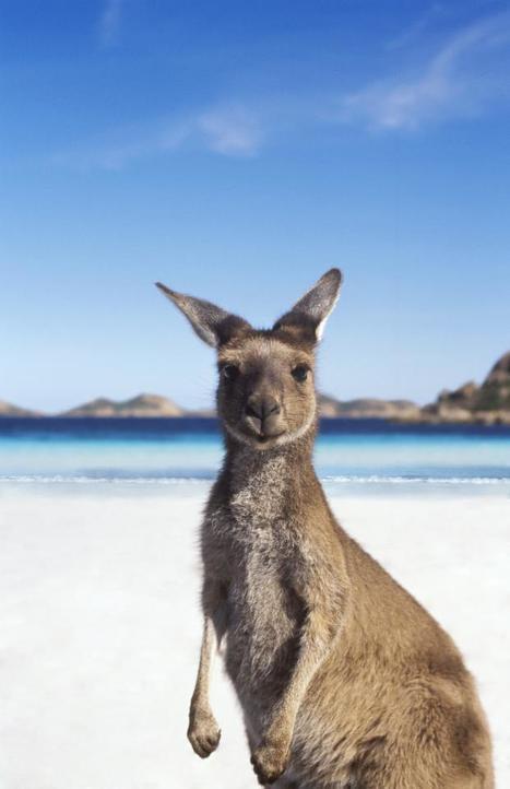 Tourism Australia's facebook page hits five million fans | Oceania Hoy! Diario Nacional | Scoop.it