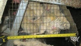 Videotaping ban targets animal rights activists   Animals R Us   Scoop.it