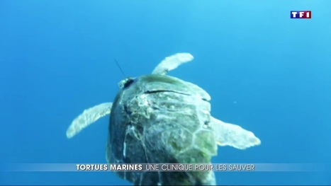 Les anges gardiens des tortues marines en action | Zones humides - Ramsar - Océans | Scoop.it