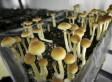 Hurricane Irene Could Sprout Bumper Crop Of Magic Mushrooms | Quite Interesting News | Scoop.it