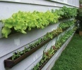 Rain Gutter Planters | Back Yard Garden Projects | Scoop.it
