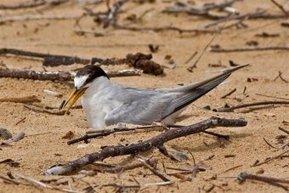Marine birds under threat - ABC News (Australian Broadcasting Corporation) | Australian animals | Scoop.it