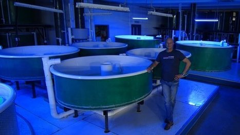 Hong Kong's fish farms in the sky | Aquaculture | Scoop.it