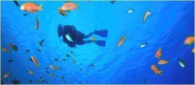 Top 19 Scuba Diving Equipment Manufacturers | ScubaObsessed | Scoop.it