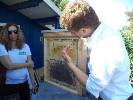 Preocupación por la salud de las abejas - Lanacion.com (Argentina) | Apicultura Investigación | Scoop.it