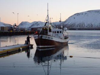 #Iceland's Tourism Ministry speaks out for #whales & Stops #WhaleMeat link below | Rescue our Ocean's & it's species from Man's Pollution! | Scoop.it
