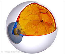 Starving Eye Cells Contribute To Age-related Macular Degeneration in Elderly | Eye Hope | Scoop.it