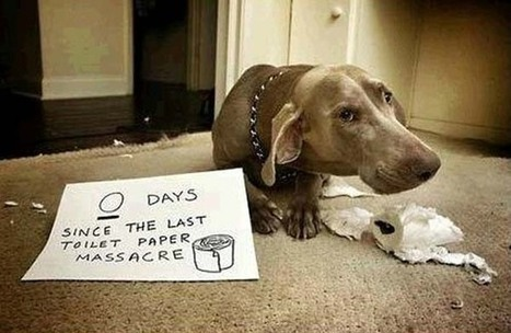 These 20 Dogs Were Busted in the Act. Now They're Being Hilariously and Adorably Shamed. | Beauty | Scoop.it