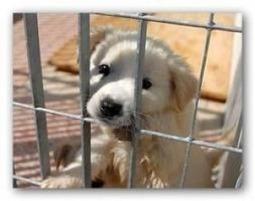 Lega difesa del cane denuncia altro caso di abbandono cuccioli - abruzzo24ore.tv | Oltre il Cuore di Lucilla News | Scoop.it