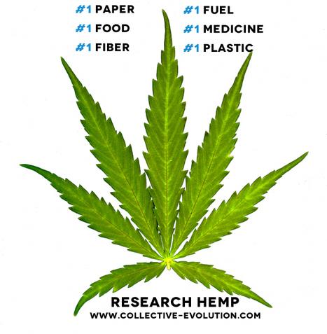 How Hemp Became Illegal: The Marijuana Link | Business News & Finance | Scoop.it