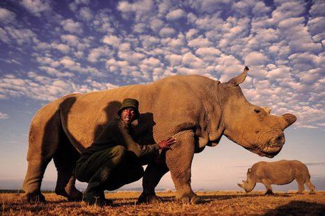 Wildlife Crime : Rhino Poaching | Into Thin Air | Scoop.it