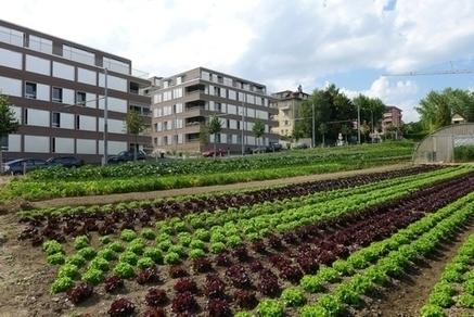Agricultura urbana — Otro mundo es posible | Cultivos Hidropónicos | Scoop.it