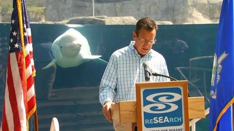 Beluga Steals the Spotlight During Governor's Press Conference | Illinois Legislative Affairs | Scoop.it