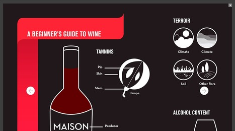 A Beginner's Guide to Wine | Wine | Scoop.it