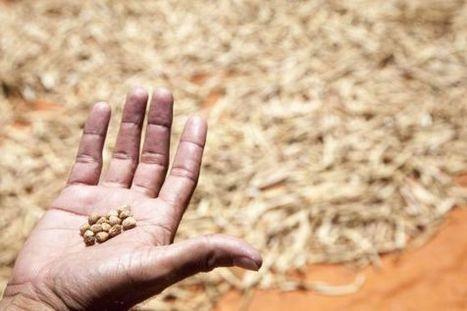 Latinoamérica desperdicia el 15% de los alimentos que produce - El País.com (España) | Energía renovable | Scoop.it