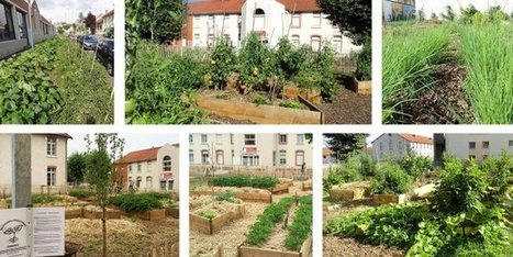 Albi fait le pari de l'agriculture urbaine | Solutions alternatives pour un monde en transition | Scoop.it