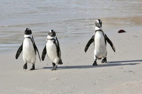 Scientists Translate Penguin Calls | IFLScience | Antarctica | Scoop.it