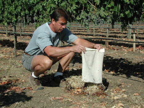 Dans un vignoble en bonne santé, le raisin n'est pas le seul à pousser | Des nouvelles de la 3ème révolution industrielle | Scoop.it