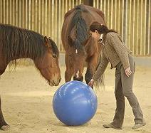 La femme qui coach avec l'aide des chevaux | Les chiffres et les Etres | Scoop.it