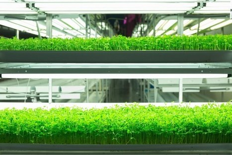 FarmedHere has high ambitions with new 60,000 sq ft vertical farm | Better Mobility, Living, Logistics, Infrastructure | Scoop.it