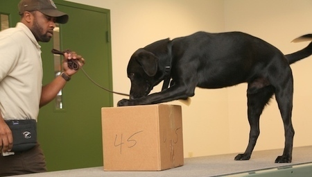 U.S. trains dogs to sniff out wildlife traffickers   Wildlife Trafficking: Who Does it? Allows it?   Scoop.it