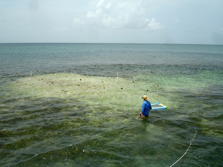 Seagrass carbon sinks fast disappearing: study | In Deep Water | Scoop.it
