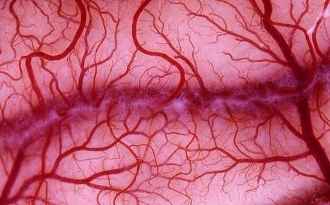 Artificial blood vessels grown from stem cells   BIOSCIENCE NEWS   Scoop.it