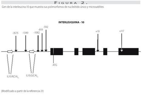 Asociación de polimorfismos genéticos de FNT-α e IL-10, citocinas reguladoras de la respuesta inmune, en enfermedades infecciosas, alérgicas y autoinmunes   Citosina en relación con la Enfermedad .   Scoop.it