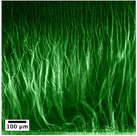 New technique grows tiny 'hairy' materials | JULIO NEVES | Scoop.it