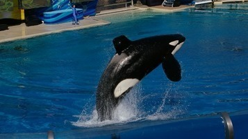 Help Animals Imprisoned by SeaWorld! | Introduce new course in schools called COMPASSION | Scoop.it
