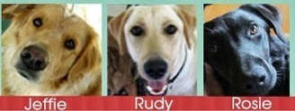 Talking Dogs at For Love of a Dog: Helping Pets in the Colorado Flooding #COFlood | Dogs | Scoop.it