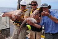 New species of fish discovered in ocean - New Zealand Herald | Amocean OceanScoops | Scoop.it