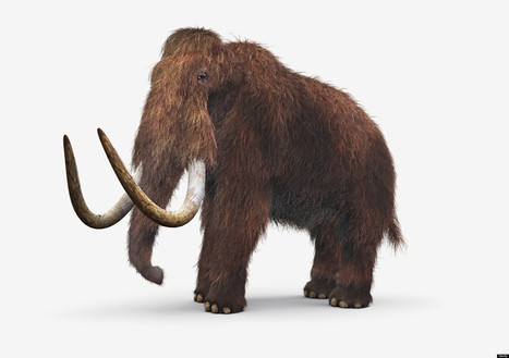 De-extinction: A Lifeline or Pandora's Box? - Huffington Post | Philosophical wanderings | Scoop.it