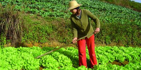 La agricultura familiar garantiza la seguridad alimentaria y contribuye al desarrollo del mundo rural | Agricultura | Scoop.it