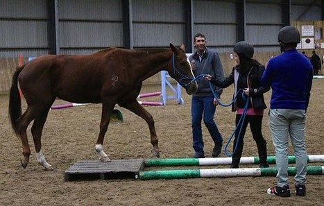 Insurance employees get hands-on with horses to improve management skills - Horse & Hound | Horses and Equine Related Info | Scoop.it