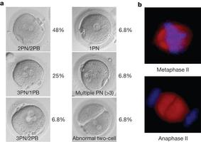 Terapia genica per sostituire i mitocondri | Med News | Scoop.it
