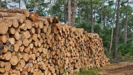 Les professionnels de la forêt lancent un cri d'alarme | News - Filière bois | Scoop.it