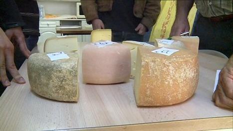 La fête du fromage en vallée d'Aspe - France 3 Aquitaine | BABinfo Pays Basque | Scoop.it