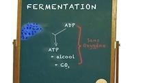 [Video Kezako] Comment fabrique-t-on l'alcool ? | Alcool : Ressources pour des collégiens | Scoop.it