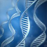 Researchers Identify New Genetic Building Blocks - Drugs.com ...   Kundaini Chakras Wellness Potential Energy Systems   Scoop.it