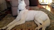 Mon coup de ♥ : Un chien handicapé qui court pour la première fois ! - Yummypets | ♫♪♫ Boîte à images de Melodie68 ♪♫♪ | Scoop.it