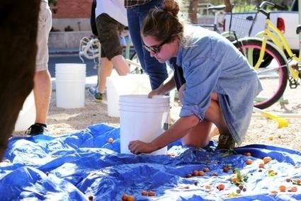 UA club harvests citrus for Tucson community | Arizona Daily Wildcat | CALS in the News | Scoop.it